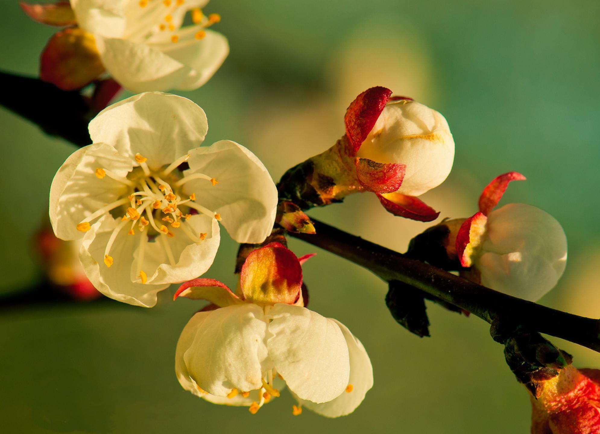 عکس های زیباترین گل ها