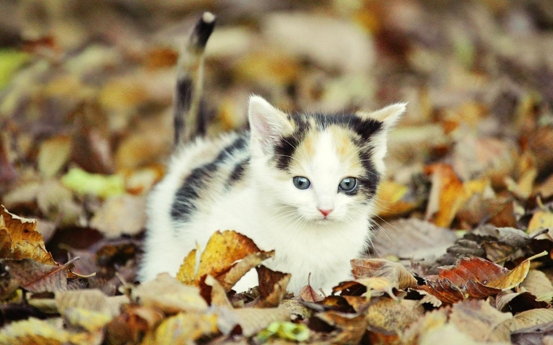 عکس+زیباترین+گربه