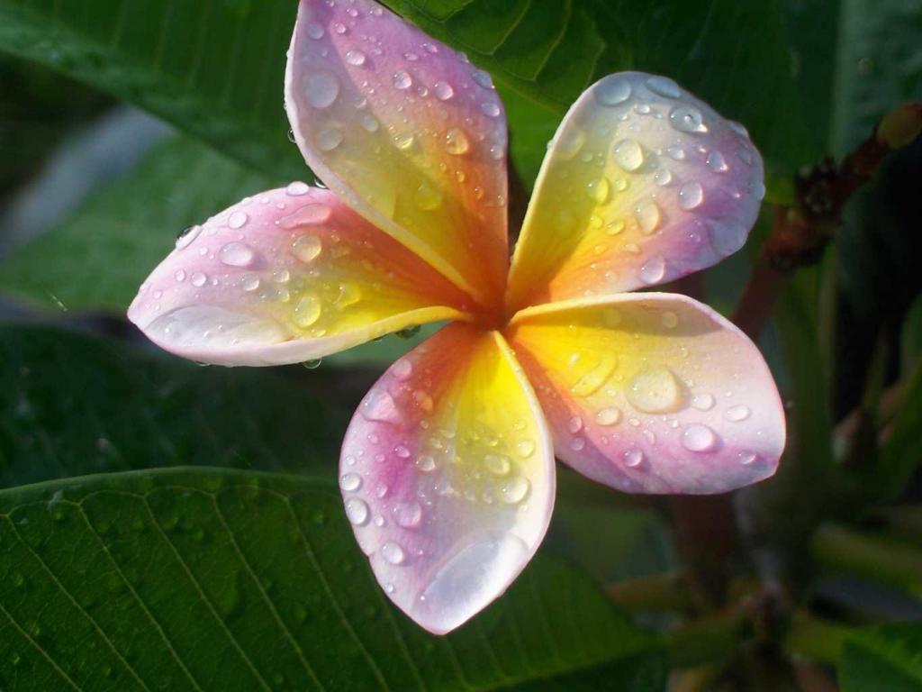Цветы индии картинки 4